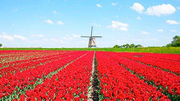Wij houden van Holland groepsuitje wageningen